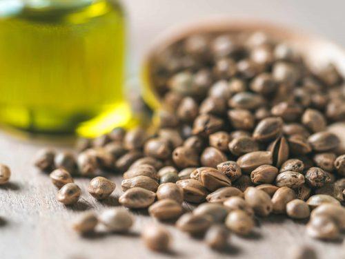 Семена конопли - максимальный источник Омега-3 жирных кислот для организма человека