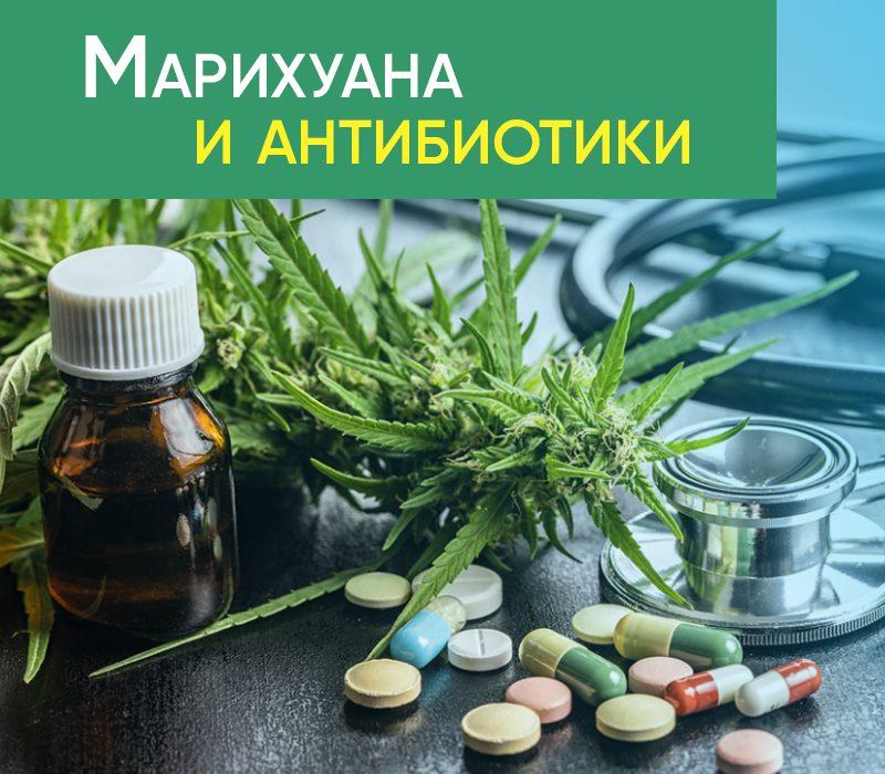 Марихуана и антибиотики